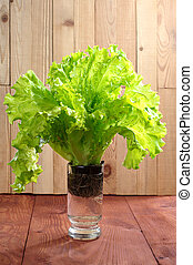 Lettuce in a glass of water