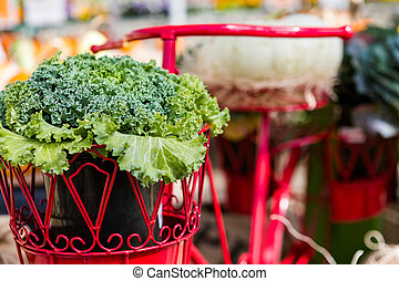 Lettuce in the pot of red bike basket.