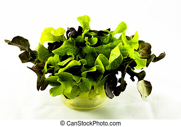 lettuce isolated on white