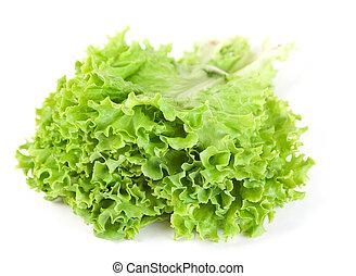 Lettuce fresh green leaf bunch on white