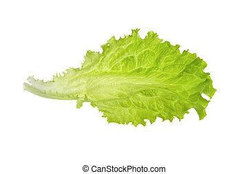 lettuce leaf isolated on white background