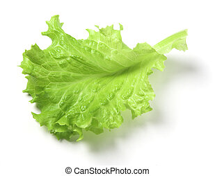 Leaf of lettuce on a white background.