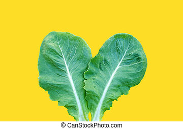 Lettuce leaf on yellow background. Top view