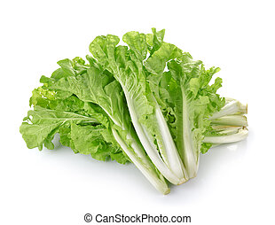 lettuce leaves isolated on white background
