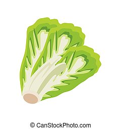 lettuce leaves on white background