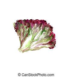 Lettuce Leaves - Watercolor Lettuce Leaves. Hand Drawn...
