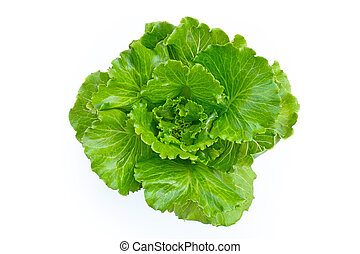 Lettuce on white background.  Top view