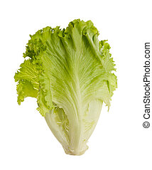 Lettuce tuft isolated on white background .Salad leafs