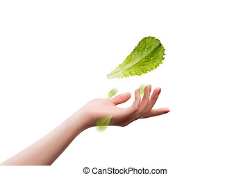 lettuce salad in hand on a white background