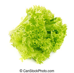 Lettuce salad isolated