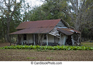 A patch of lettuce grows in front of an abandoned homestead.