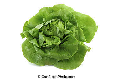 lettuce - big fresh green lettuce on white background