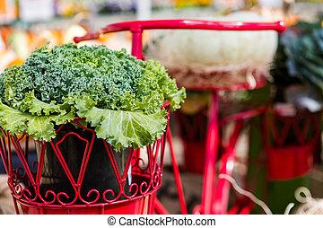 Lettuce in the pot of red bike basket.