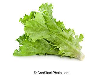 Lettuce on white