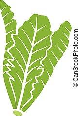 lettuce vector icon