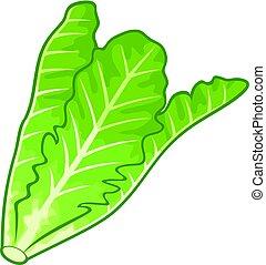 lettuce vector illustration
