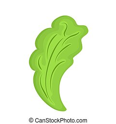 Lettuce vector isolated on white background.