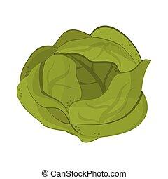 Lettuce vegetable food symbol vector illustration graphic...
