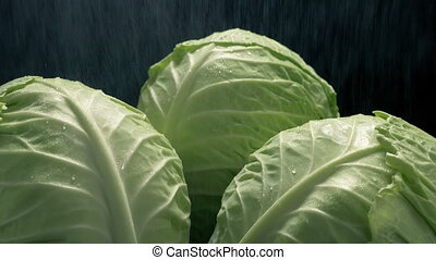 Closeup of lettuce vegetables being cleaned in water mist