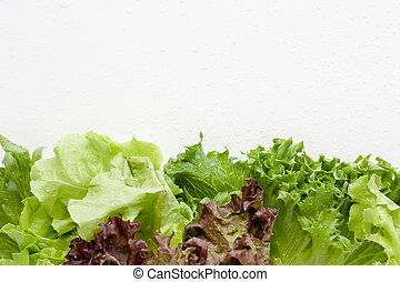 Lettuce with water drops on white background