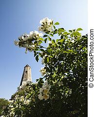 leuchturm, flowers.