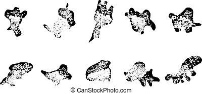 leucocytes, de, a, grenouille, vendange, engraving.