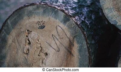 leugen, bos, logboeken, dennenboom, deforestation.