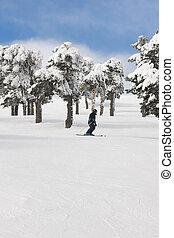 leute, ski fahrend, auf, a, wald, slope., weißes, berg, landschaft., winter