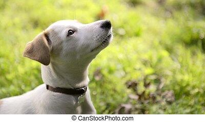 leute, und, hund, hund trainer, und, haustier