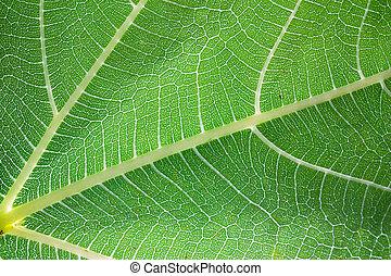 levél növényen, áttetsző