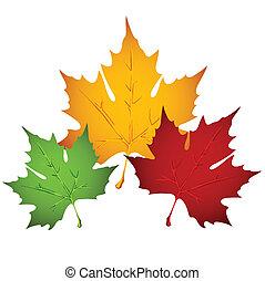 levél növényen, ősz