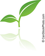 levél növényen, 4
