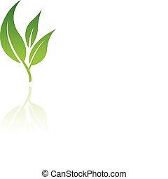 levél növényen, 8