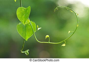 levél növényen, alatt, szív alakzat
