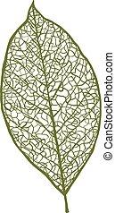 levél növényen, anyacsavar, elszigetelt, vektor, háttér,...