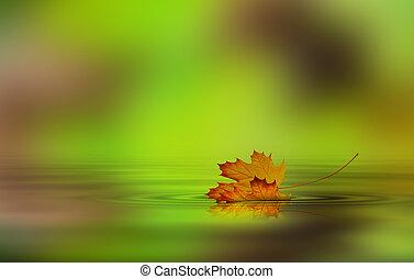 levél növényen, bukott, képben látható, a, víz