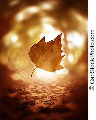 levél növényen, fa, feláll, ősz, háttér, becsuk, esés
