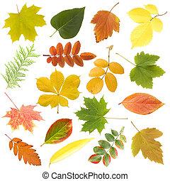 levél növényen, felett, elszigetelt, ősz, háttér, fehér