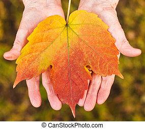 levél növényen, hatalom kezezés
