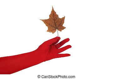 levél növényen, kéz