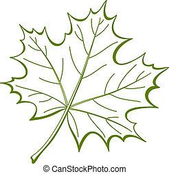 levél növényen, közül, kanadai, juharfa, pictogram