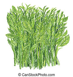 levél növényen, kellemes, bokor