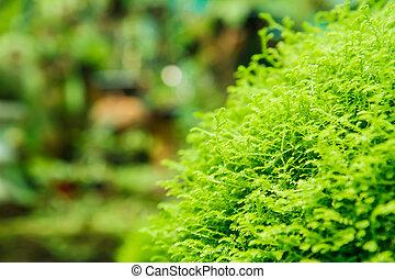 levél növényen, moha, struktúra