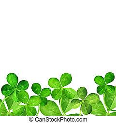 levél növényen, négy, lóhere