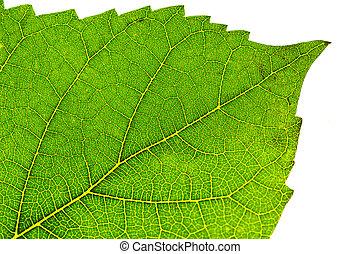 levél növényen, részletez