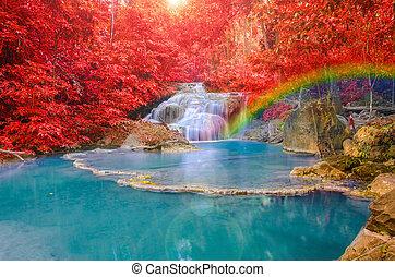 levél növényen, szivárványok, vízesés, csodálatos, mély piros, erdő