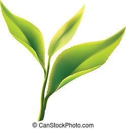 levél növényen, tea, zöld háttér, friss, fehér