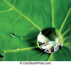 levél növényen, tip., waterdrop, feláll, vektor, becsuk