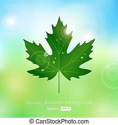 levél növényen, vektor, juharfa, savanyúcukorka, víz