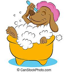 levando, bolha, cão, banho